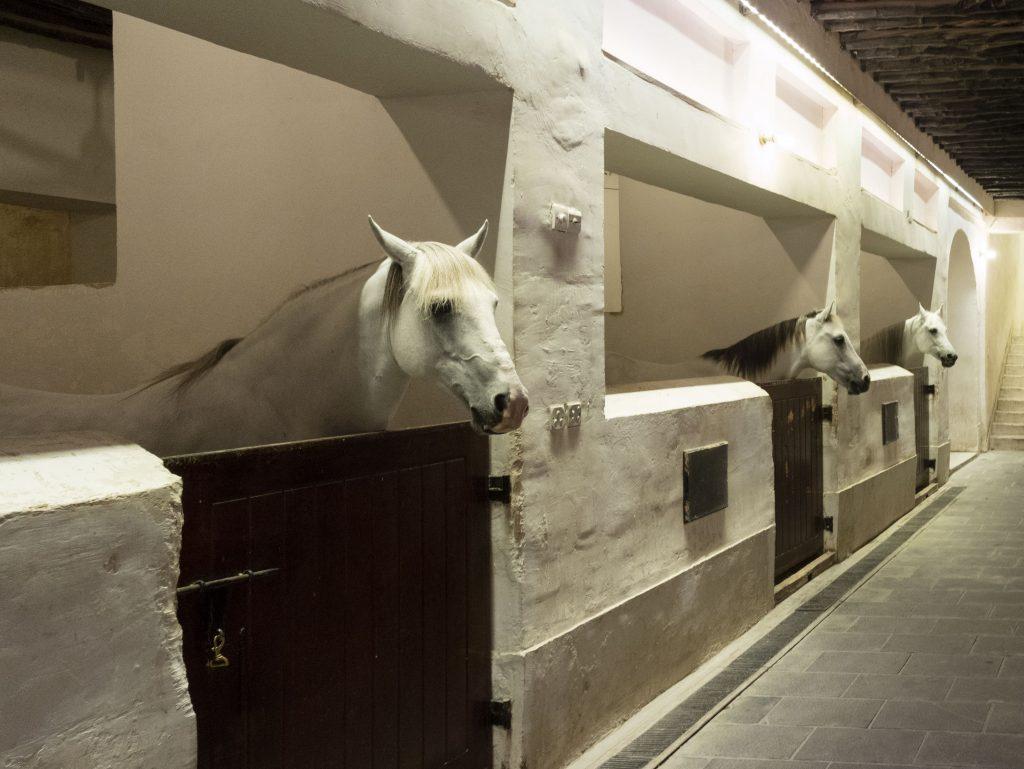 stalla cavalli SOUQ WAQIF Doha - Qatar