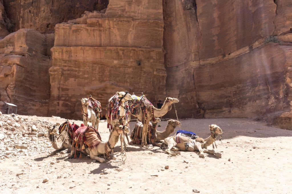 I cammelli a Petra