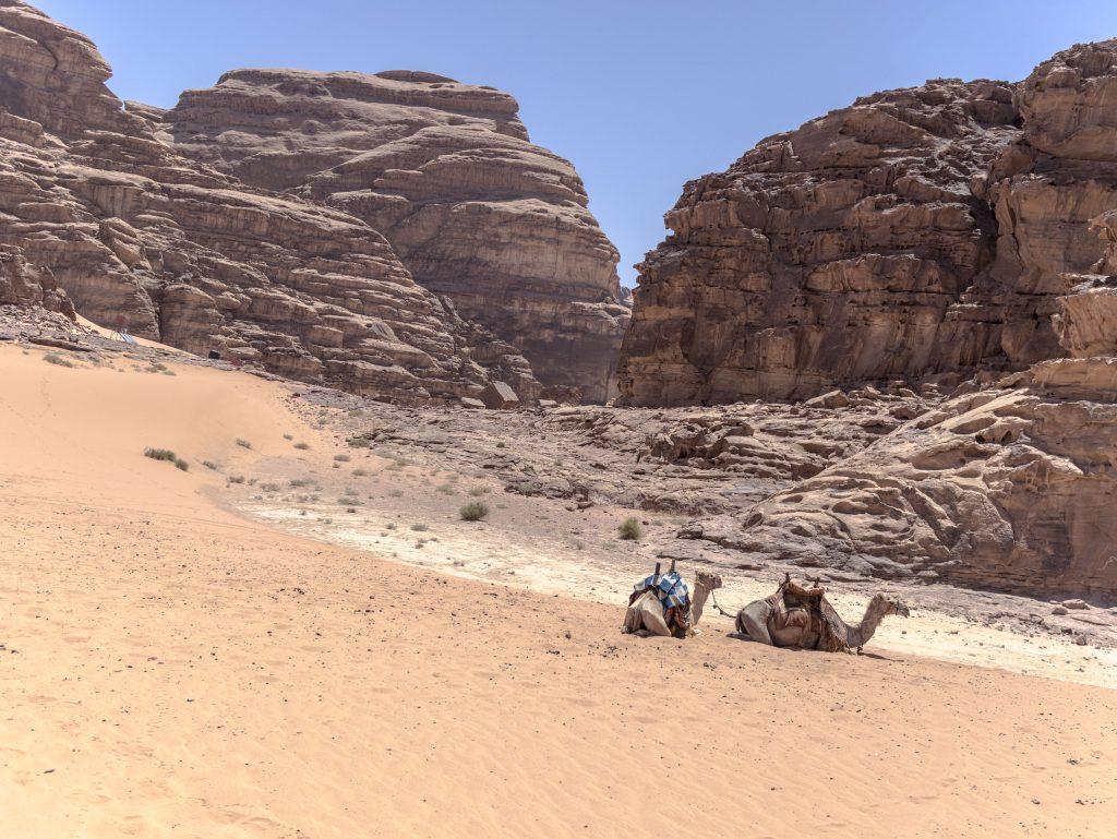 wadi rum escursione in cammello