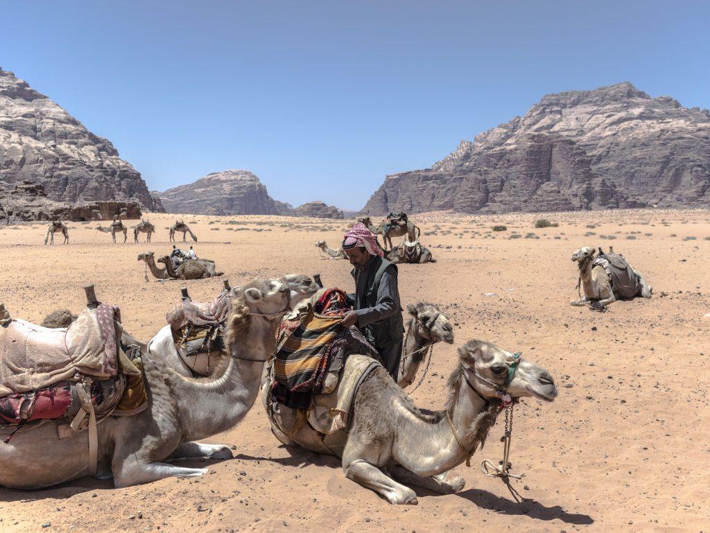wadi rum i cammelli