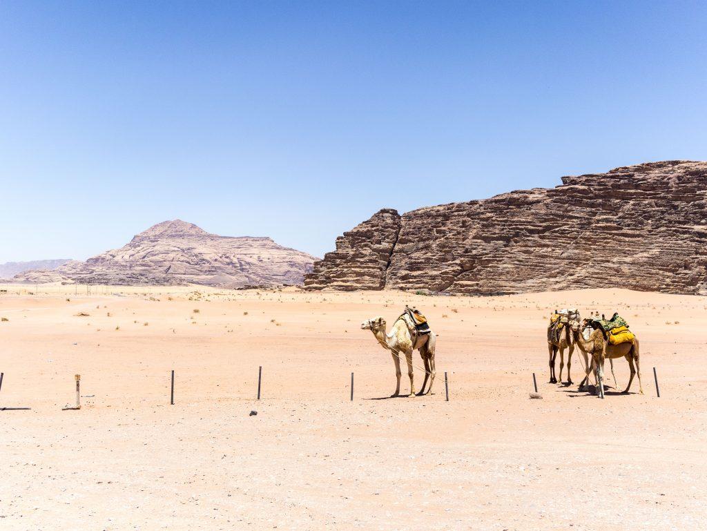 wadi rum esperienza in cammello
