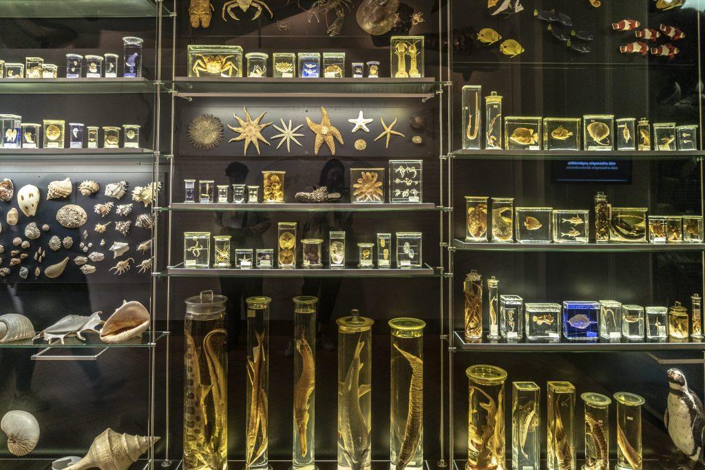 HELSINKI – NATURAL HISTORY MUSEUM