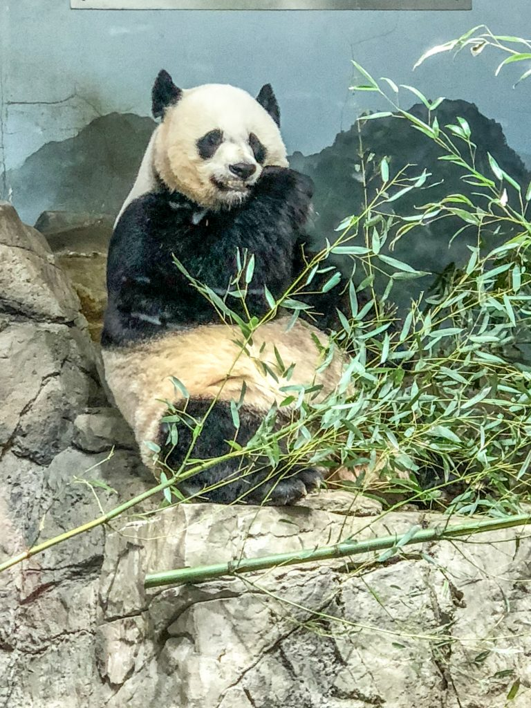 SMITHSONIAN – LO ZOO