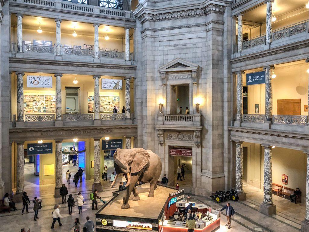 SMITHSONIAN – MUSEO NAZIONALE DI STORIA NATURALE