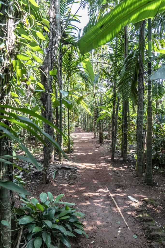 Costa Crociere GOA: SAPORI E CULTURA DI GOA E TOUR DELLE PIANTAGIONI