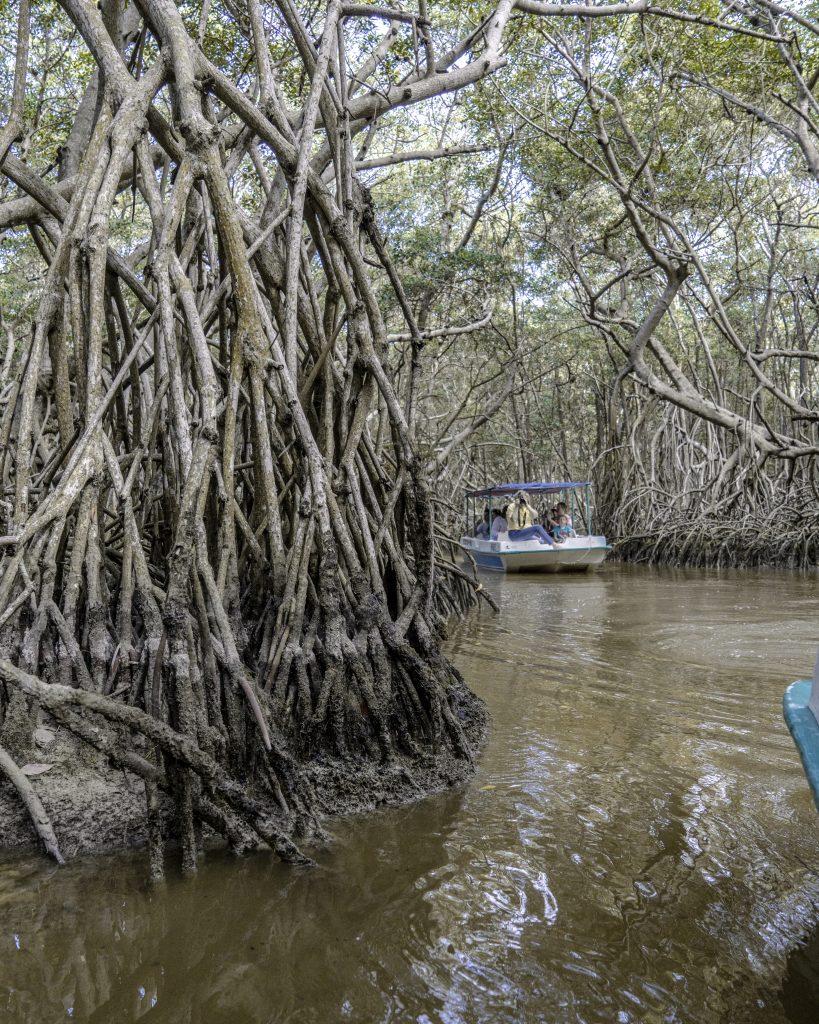 CELESTÚN – il giro tra le mangrovie