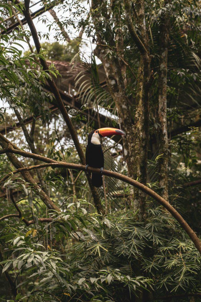 Cascate di Iguazù - PARQUE DAS AVES
