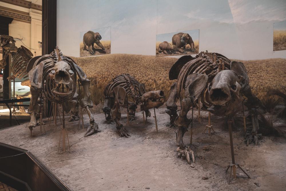 La plata - MUSEO DE LA PLATA