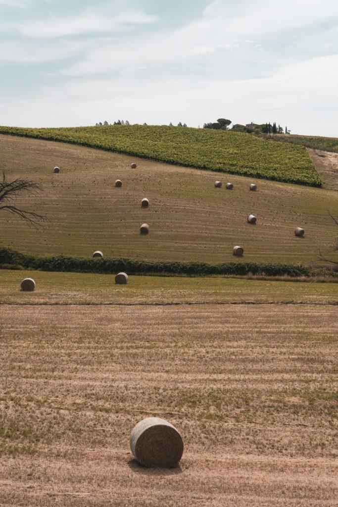 AZIENDA AGRICOLA CAPANNA – CAPANNA SUITES