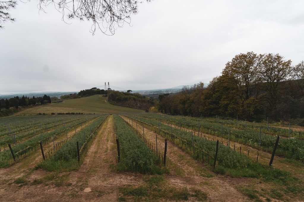 TENUTA DI SAN VITO, AGRITURISMO