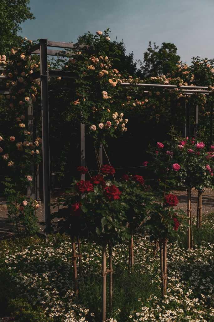 BERNA, IL GIARDINO DELLE ROSE