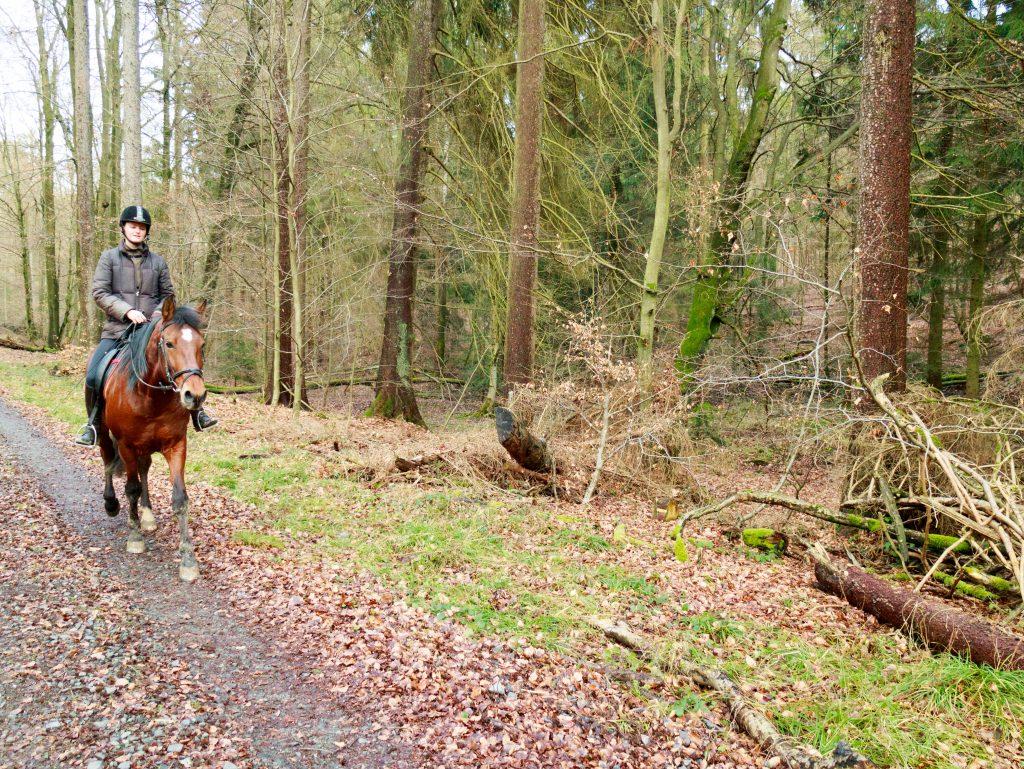 Cavallo a passeggio