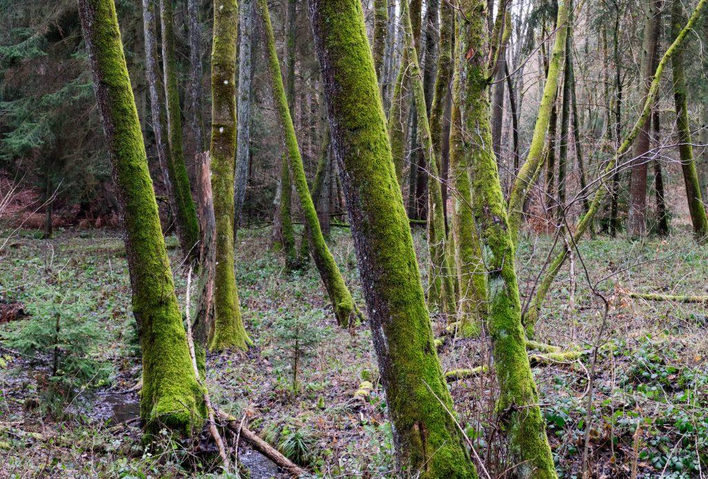 bosco di Idstein particolare