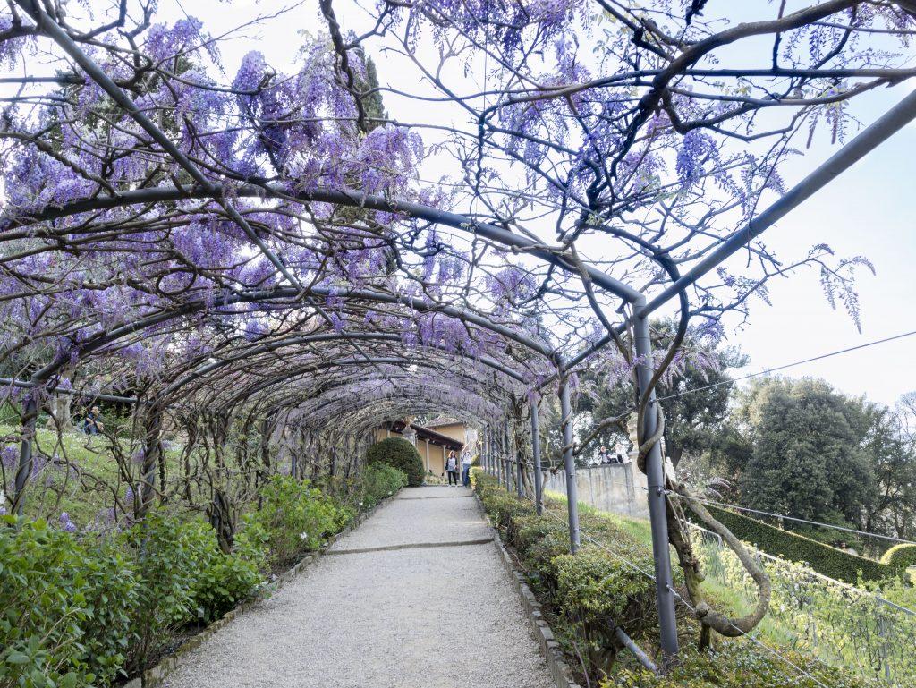 Tunnel Dei Glicini Firenze - Giardino Villa Bardini